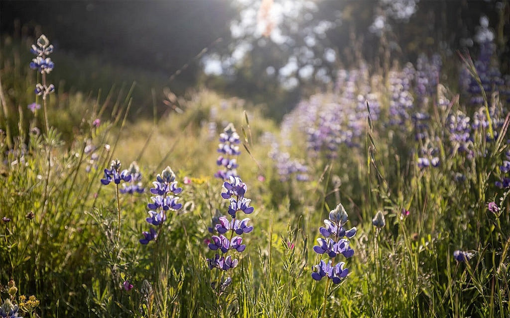 Wildflowers at Camp Carmel Valley